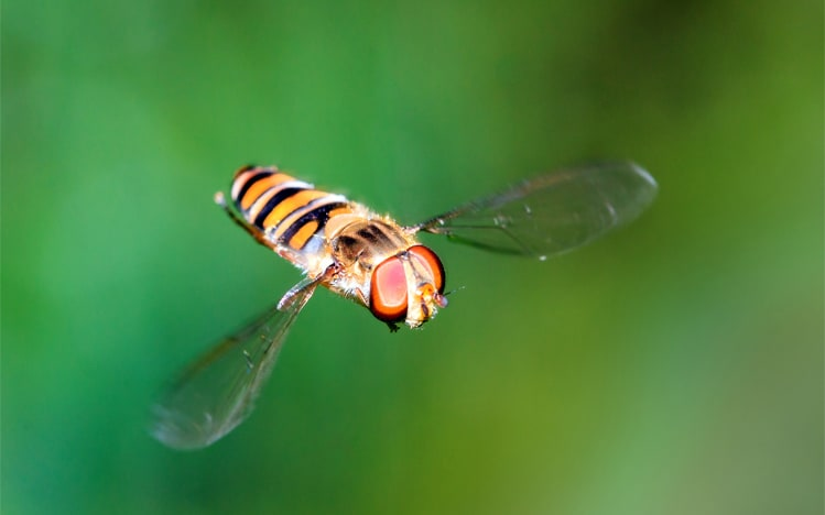 Don't be a hoverfly when managing people